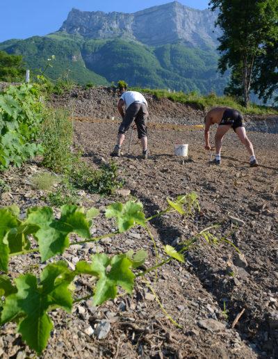 Plantation de la vigne au lieu dit La Perrouse, sous le Chateau de Miolans et la dent d'Arclusaz, Domaine Saint-Germain, vin biologique en Savoie, Saint-Pierre d'Albigny