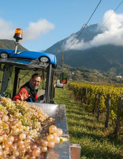 Portrait de Raphael Saint-Germain, vigneron bio, domaine Saint-Germain, vin biologique en Savoie, Saint-Pierre d'Albigny