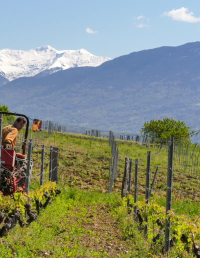 travail mécanique des interceps au printemps 2016, Domaine Saint-Germain, vin biologique en Savoie, Saint-Pierre d'Albigny