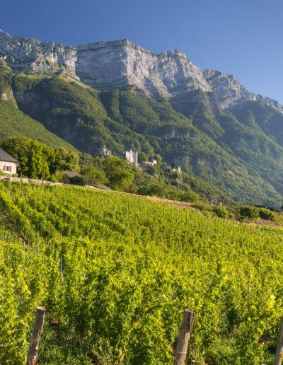Lieu dit La Perrouse, sous le Chateau de Miolans et la dent d'Arclusaz, Domaine Saint-Germain, vin biologique en Savoie, Saint-Pierre d'Albigny