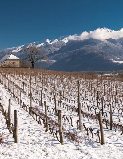 Domaine Saint-Germain, vins bio en Savoie, taille de la vigne en hiver
